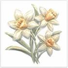 TFA011 Оранжерея Нарциссы