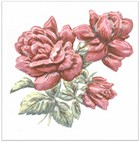 TFA012 Оранжерея Розы