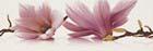 Abrila Kwiat A (блестящий)