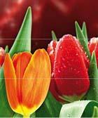 Syntia Tulip B (к-кт 3пл)