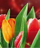Syntia Tulip А (к-кт 3пл)